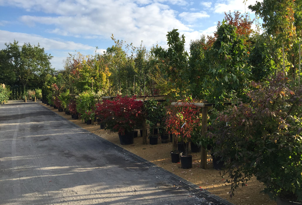 If you prefer to choose your own tree, opt for potted
