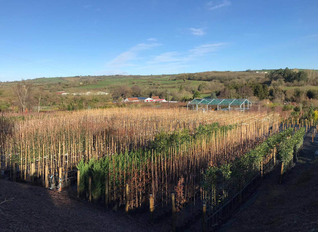 A sea of well organised container-grown trees at the nursery