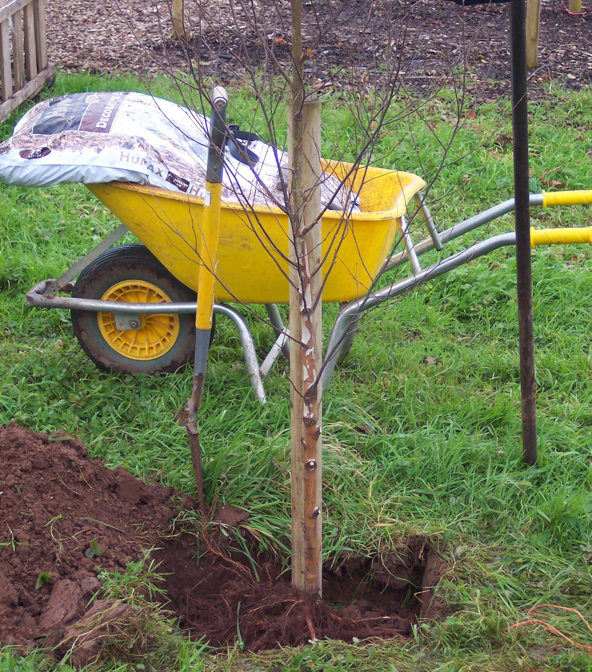 A single stake works on 15L potted trees