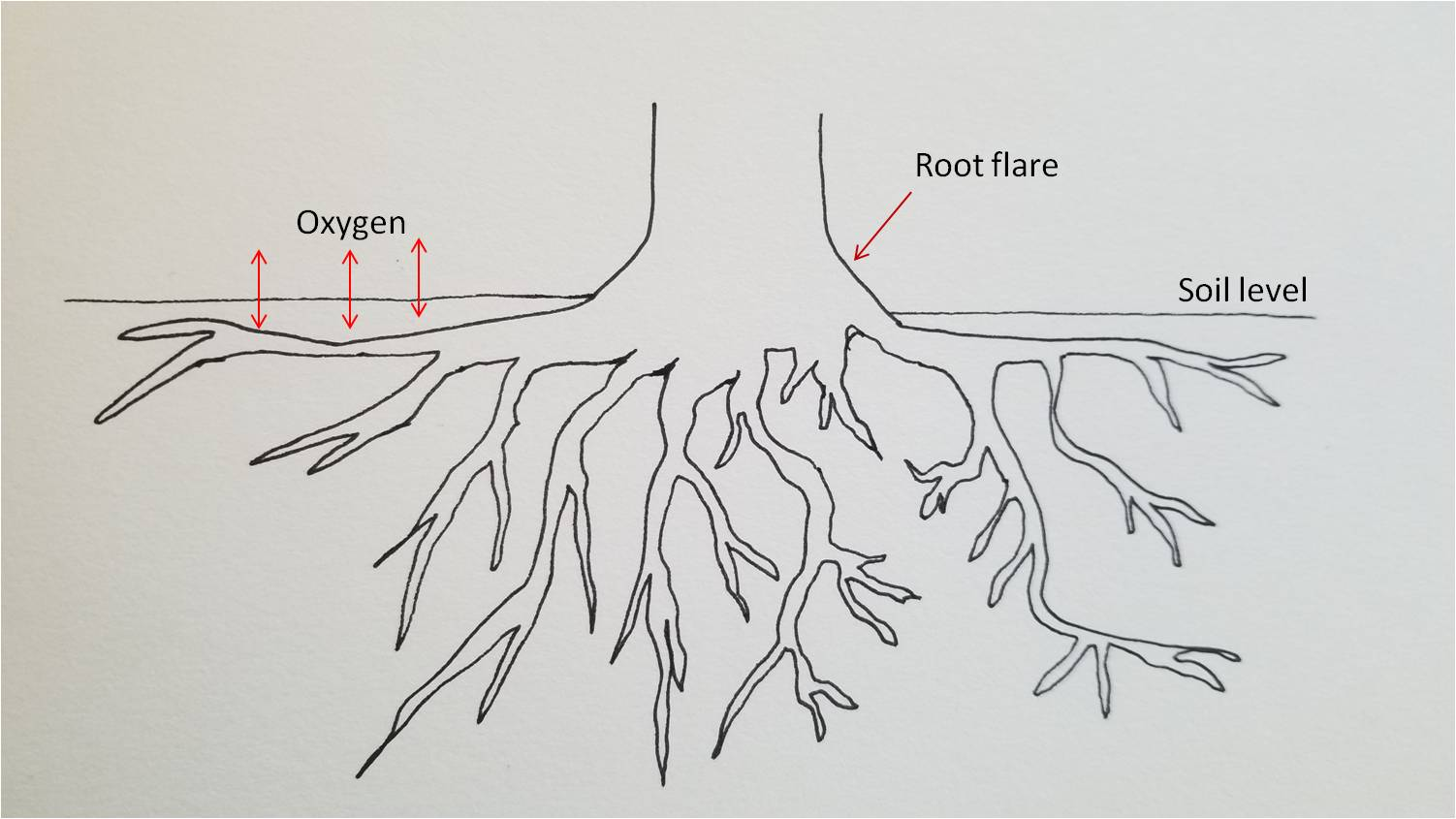 Roots need to access oxygen